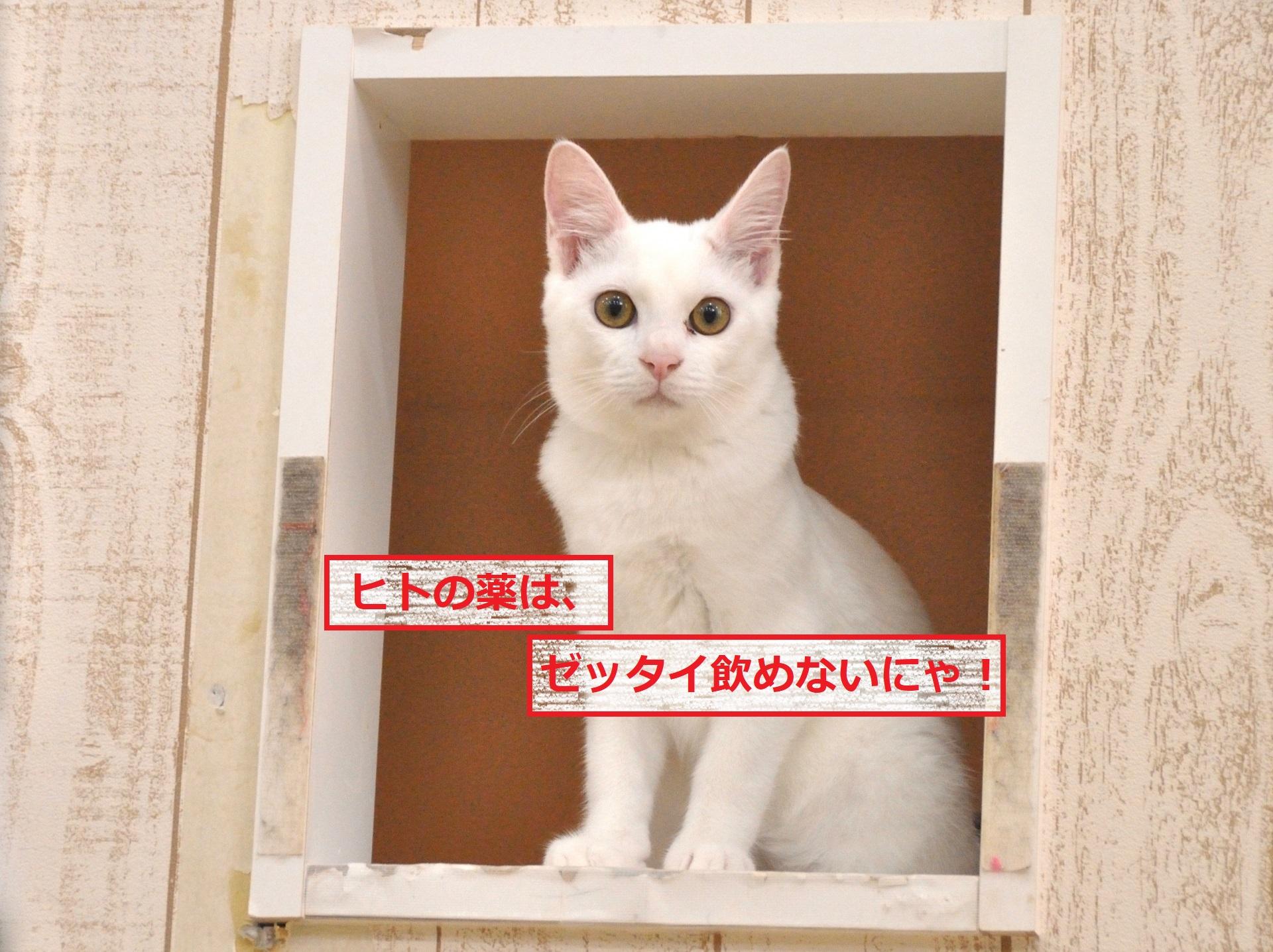 ネコにかぜ薬禁止
