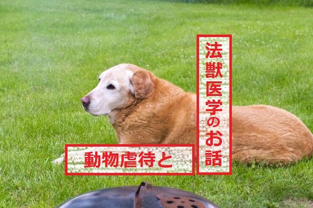 動物虐待と法獣医学のお話②