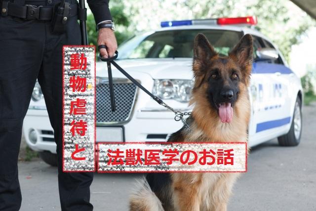 動物虐待と法獣医学のお話